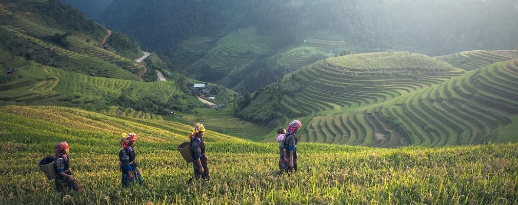Agricoltura in Cambogia