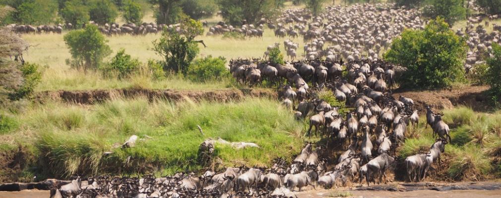 Grande migrazione