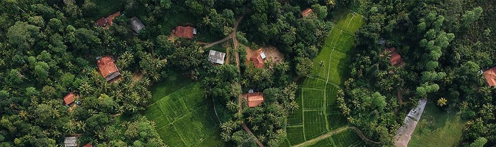 Coltivazioni dello Sri Lanka viste dall'alto