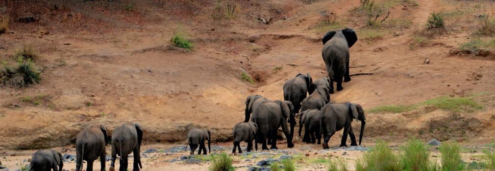 Elefanti, Sri Lanka