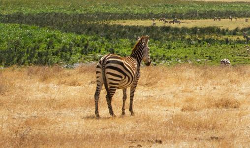 Visto Tanzania